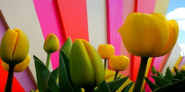 Secrets of the Tulip